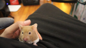 122 of Our Favourite Funny and Cute Hamster Names