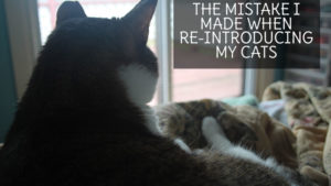 The Mistake I Made when Re-Introducing my Cats