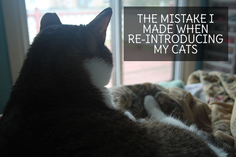 the-mistake-i-made-while-re-introduing-my-cats