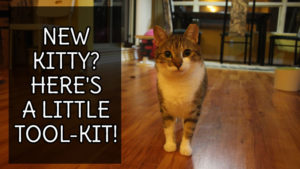 new-kitty-heres-a-little-tool-kit-pets-overload