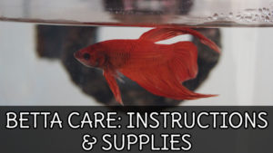BETTA FISH CARE SHEET: Instructions For Aquarium Setup & Supplies