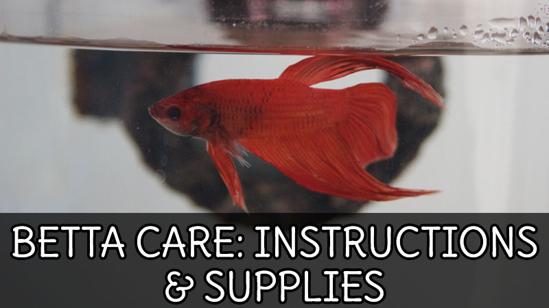 BETTA CARE: Instructions & Supplies