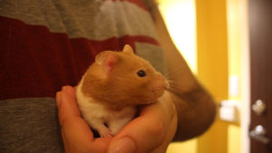 24 Of the Most Common Hamster Illnesses & Diseases