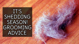 shedding-season-grooming-advice