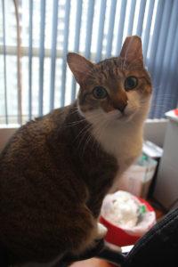 beau-standing-chair-cute-cat-adorable-kitten
