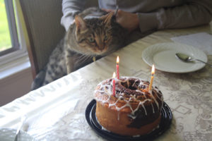 walker-birthday-cake-cat-kitten-domestic-shorthair