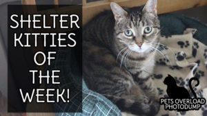 shelter-kitties-of-the-week