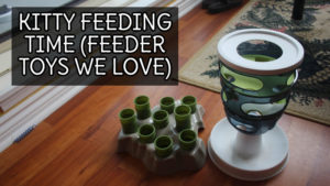 Kitty Feeding Time (Cat Slow Feeder Toys We Love)