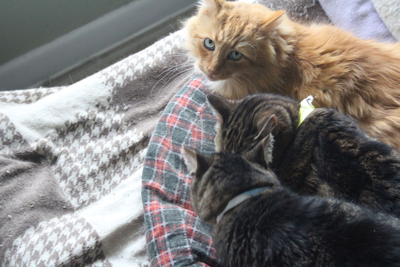 Shelter kitties, Shelter kitties, how cute are you!?