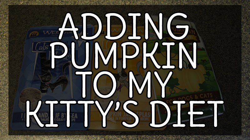 Adding Pumpkin to my Kitty's Diet