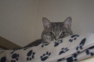 avery-closet-cat-grey-cute-kitten-cat-pets-overload