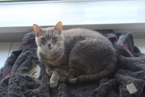avery-sitting-coat-jacket-sweater-adorable-cat-kitten