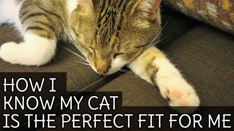how-i-know-my-cat-is-the-perfect-fit-for-me