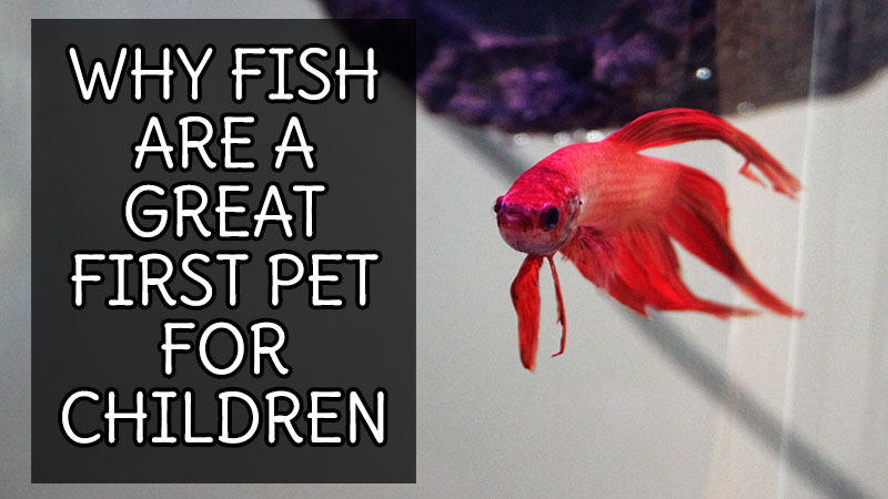 Why Fish are a Great First Pet for Children