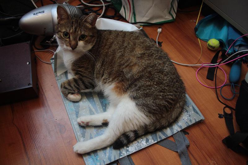 beau-sitting-on-plastic-bag-lying-down