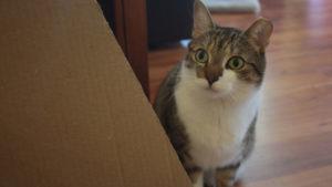 Beau, My Cat, Is Terrified of Plastic Bags