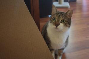 beau-hiding-behind-cat-cut-adorable