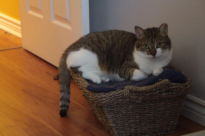 beau-sitting-in-basket-adorable-cute
