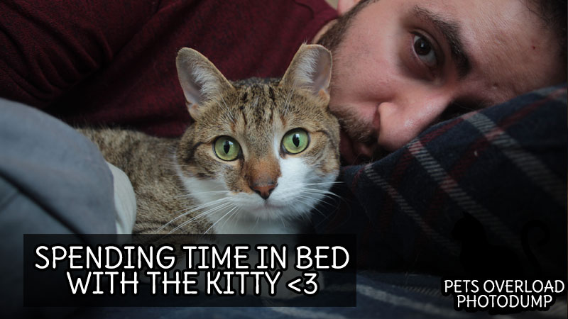 spending-time-in-bed-with-the-kitty