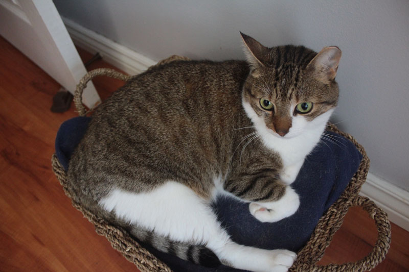 beau-sitting-in-basket-adorable1
