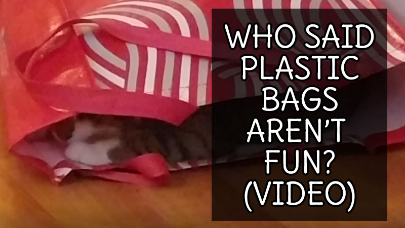 Who Said Plastic Bags Aren't Fun? (Video)