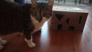 Keeping A Cat With Pica Busy: DIY Feeder Toys