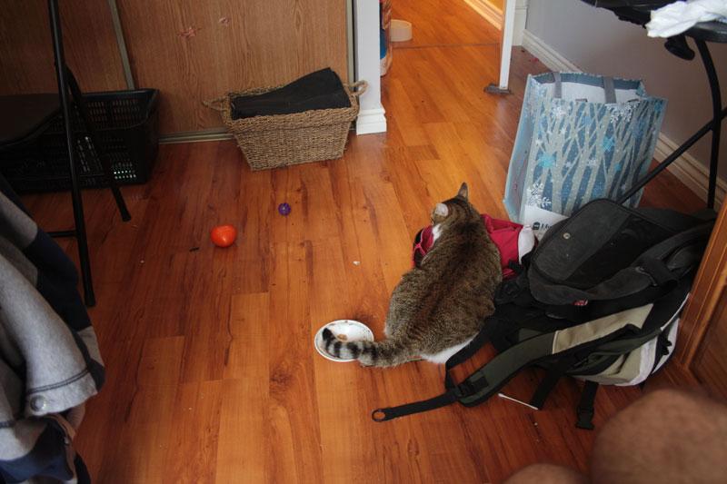 beau-sitting-on-floor-tail