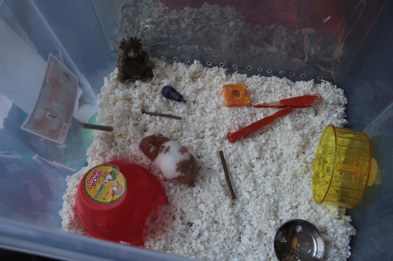 DIY: Making an affordable Hamster Enclosure