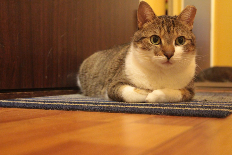 beau-sitting-on-mat-2