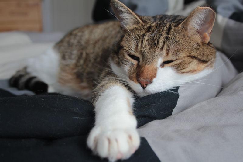 beau-sleeping-inb-ed