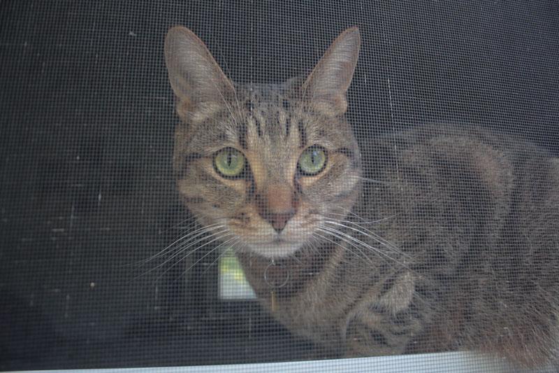 walker-close-up-window