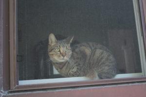 walker-sitting-in-window