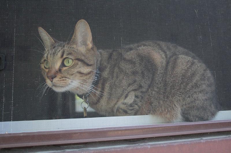 walker-sitting-in-window-2
