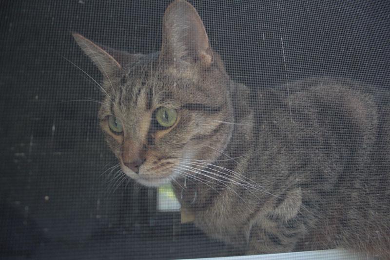 walker-sitting-window-cute