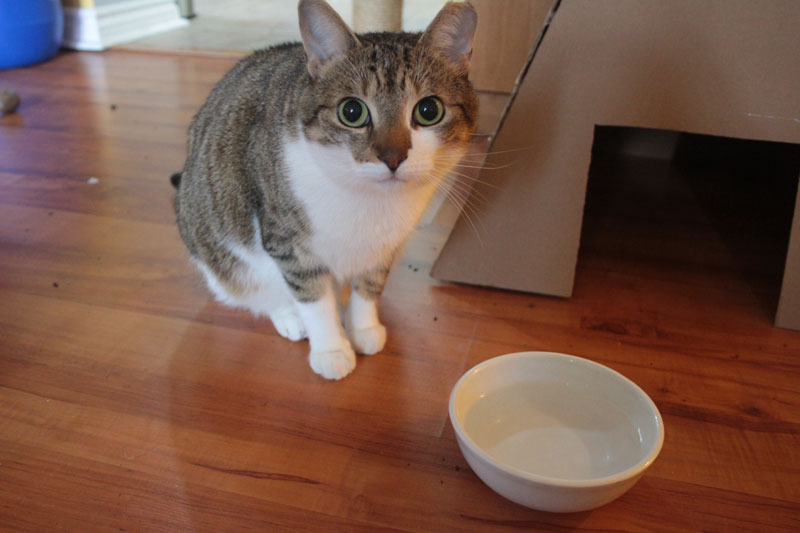 Why we changed where we place our water bowls