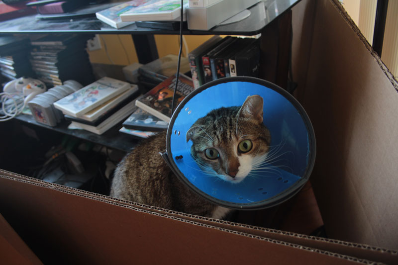 beau-sitting-with-cone