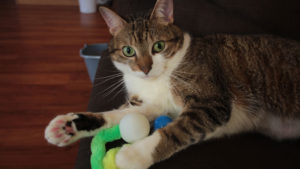 REVIEW: Wiggly Sampler Pack (Cat Toy)