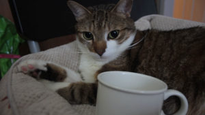 Can Cats or Dogs Drink Coffee?