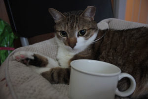 coffee-cats-beau