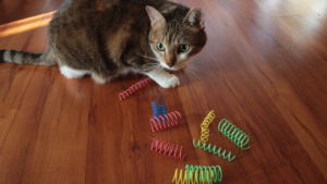 REVIEW: SPOT Cat Springs (Passive Cat Toy)