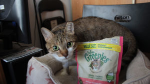 REVIEW: FELINE GREENIES Dental Treats Savory Salmon Flavor