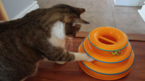 REVIEW: Petstages Tower of Tracks Pet Toys