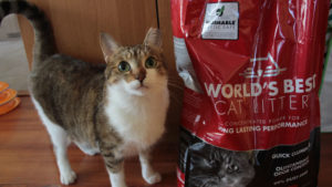 REVIEW: World's Best Cat Litter (Multi-Cat)