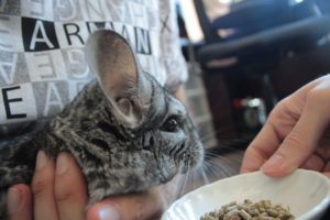 meet-gary-chinchilla-1