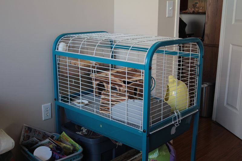meet-gary-chinchilla-cage-2