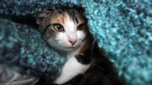 Do Cats & Kittens Like Music?