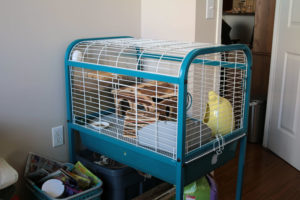 chinchilla-cages