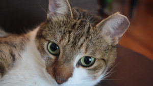 Can Cats & Kittens Drink Almond Milk and what happens to them if they do?