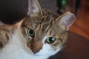 beau-close-up-face