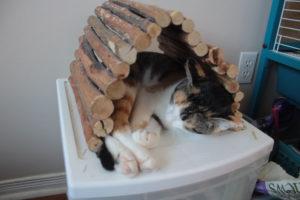 kalista-sleeping-in-hut-2